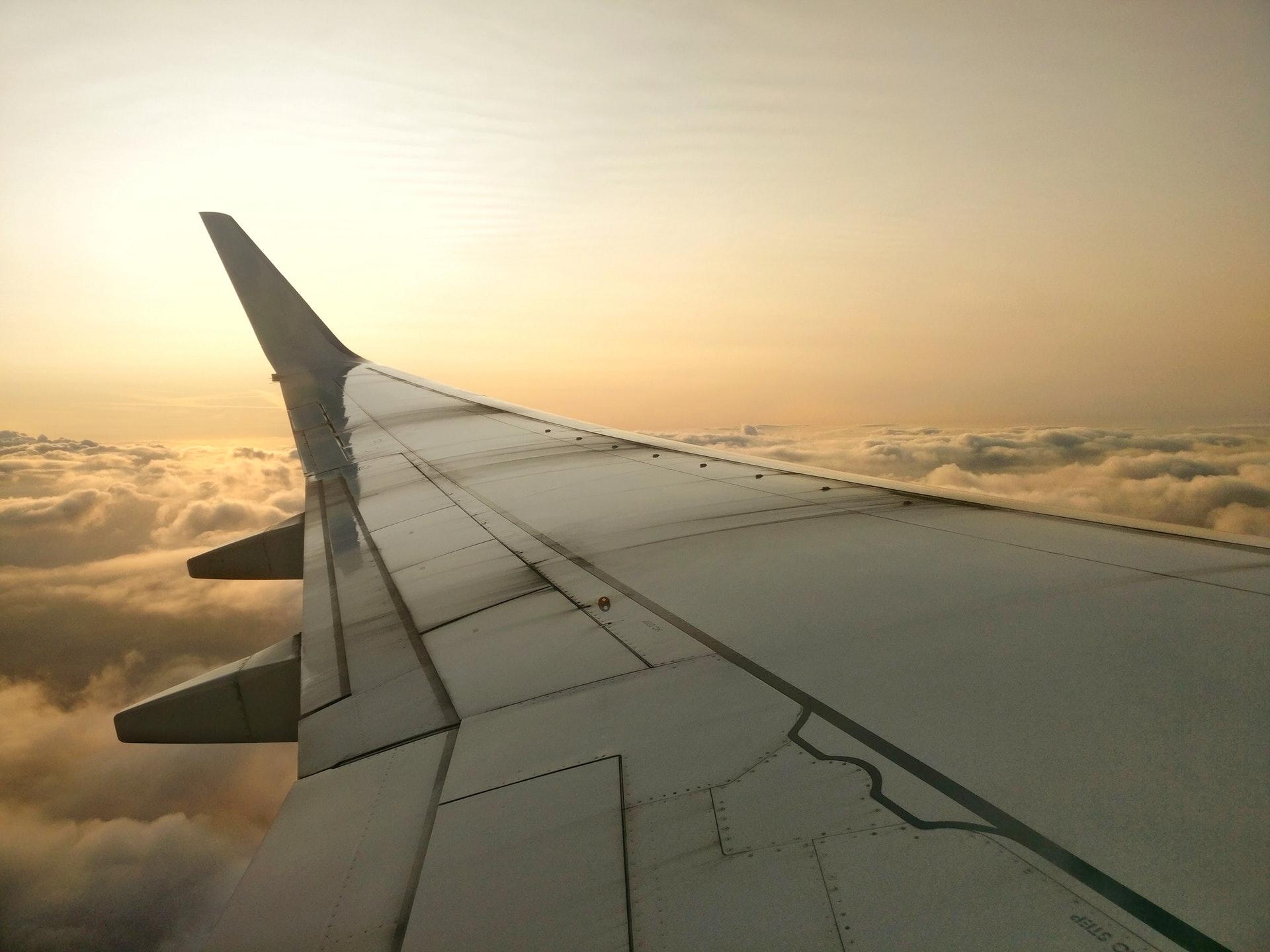Haustiere in einem Flugzeug